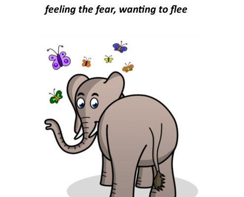 Elephant in my Stomach