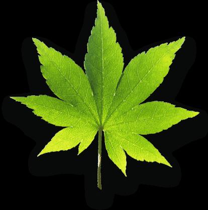 Leaf Slide